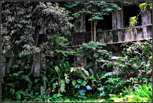 La estructura engullida por la selva